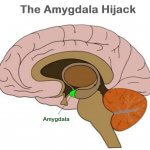 Behaviour and the Brain:  Amygdala Hijack