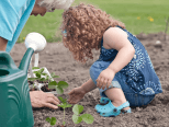 Growing strawberry plants with your children